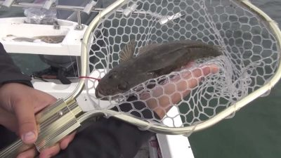 how-to-catch-whiting