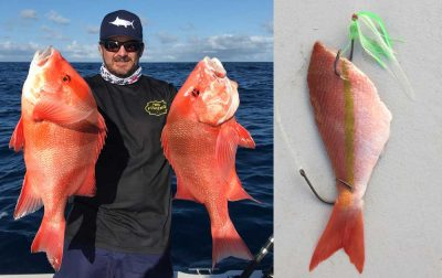 how to catch red emperor best rigs and baits