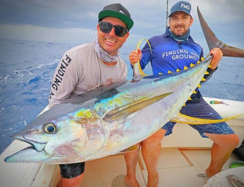 70kg Yellowfin Tuna on NEW Equalizer Twin Pin Pro