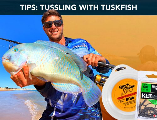 Tussling with Tuskfish land based
