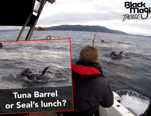 Tuna vs Seal vs man… we have a winner